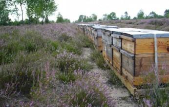 Bienenstock Heide